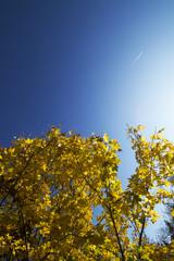 Gold-gelber Herbst Himmel
