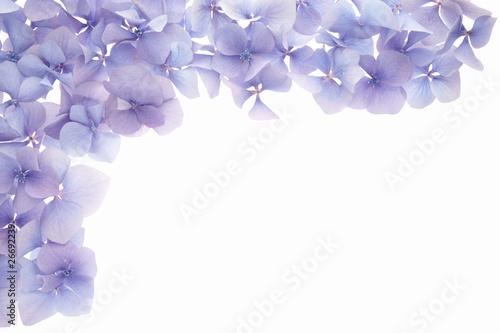 petal frame border