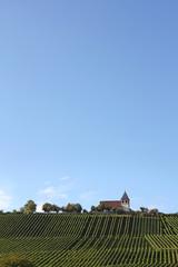 Weinberg in Baden-Württemberg