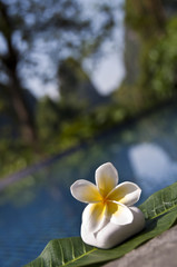 Galet et fleur de frangipanier, fond de piscine