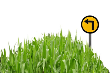 Green grass and traffic symbol as white isolate background