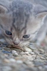 schnüffelndes Katzenbaby