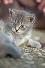 Katzenbaby Katzenkind