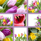 Fototapety Tulips collage