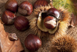 Chestnut with Bur poster