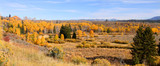 Autumn trees in Wyoming near Moran junction poster