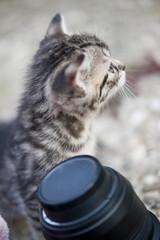 Katze mit Objektiv