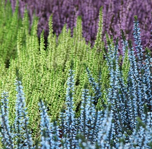 stowarzyszenie-bruyeres-zielony-niebieski-fioletowy