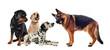 groupe de quatre chiens