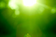 Abstract green forest defocused with sunbeam - 26743871