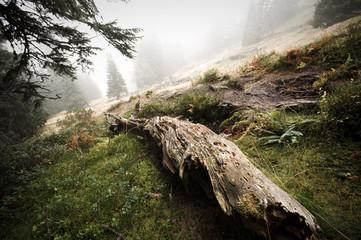 Holzstamm in Nebelstimmung