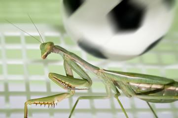 Mantis religiosa jugando al futbol 2