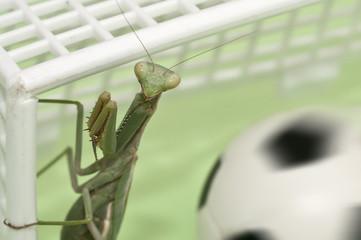 Mantis religiosa jugando al futbol 3