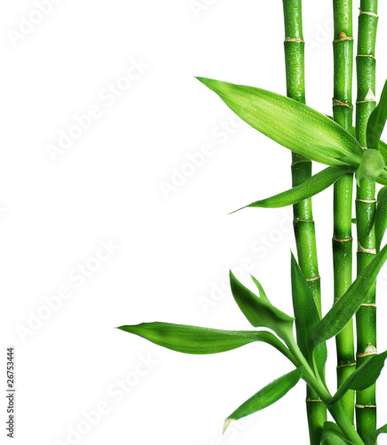Fototapeten,bambus,landesgericht,isoliert,grün