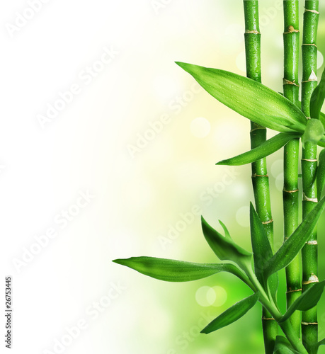 Bamboo isolated on white