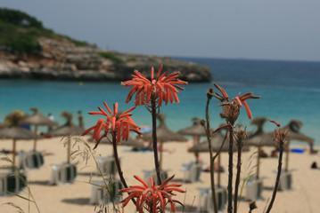 Sandbucht im Mittelmeer