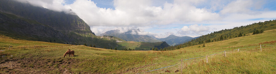 French mountains with green grass and horses