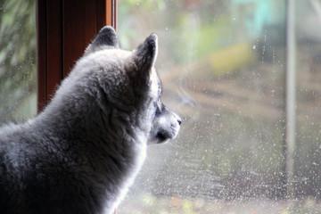Welpe am Fenster