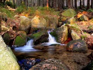 Kleiner Wasserlauf im Wald