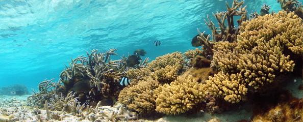 Coraux et poissons dans un lagon.