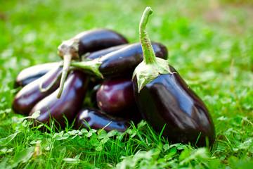 Raw eggplants in grass