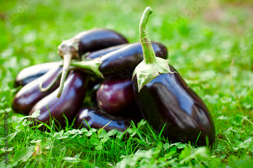 Raw eggplants in grass