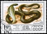 USSR - CIRCA 1977 Cobra poster