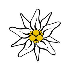 Berg Blume Edelweiß Vektor