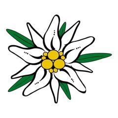 Edelweiss Vektor