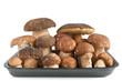 tray with mushrooms - vassoio con funghi porcini