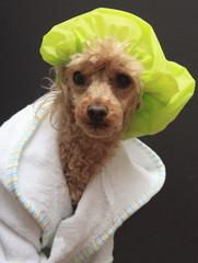 Dog In Shower Cap