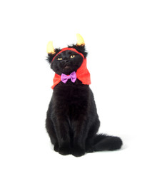 Black cat with devil horns