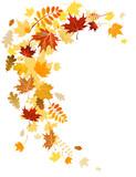 Fototapety Autumn leaves  swirl