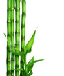 Bamboo over white