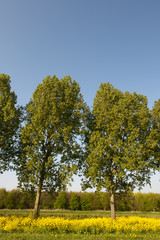 Trees in vertical landscape