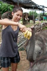 Mädchen füttert Elefanten