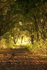 Heller Weg durch die Natur