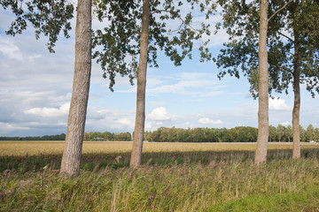 Trees in a typical Dutch rural landscape