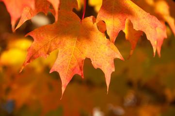 Golden Autumn Leaves in Warm Light