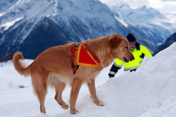 cane da valanga, unità cinofile