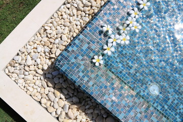flowers floating in swimming pool
