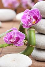 2 orchidées