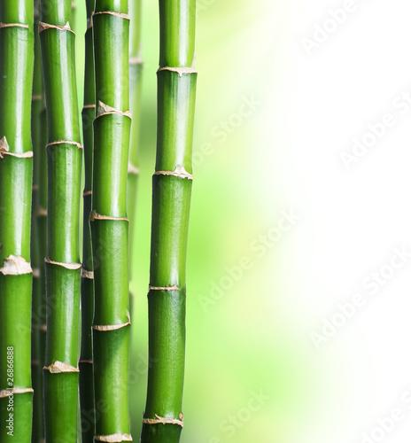 Fototapeten,bambus,frohes,glück,kurort