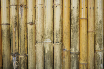 Bamboo old texture © 501room