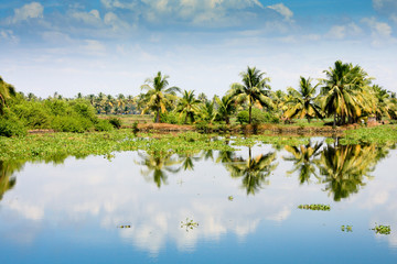 Palm trees reflection in Kerala backwaters