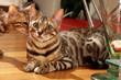 deux chats parmi les bibelots