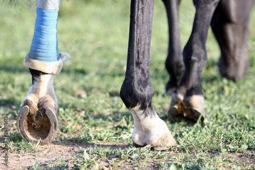 Plexiglas Paardrijden verletzt