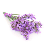 Fototapety Lavender Herb Flower Posy