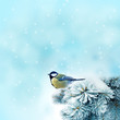 bird (great titmouse ) in winter time