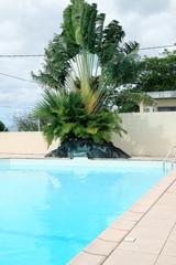 arbre du voyageur, ravenale en bordure de piscine